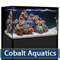 cobalt-main.jpg